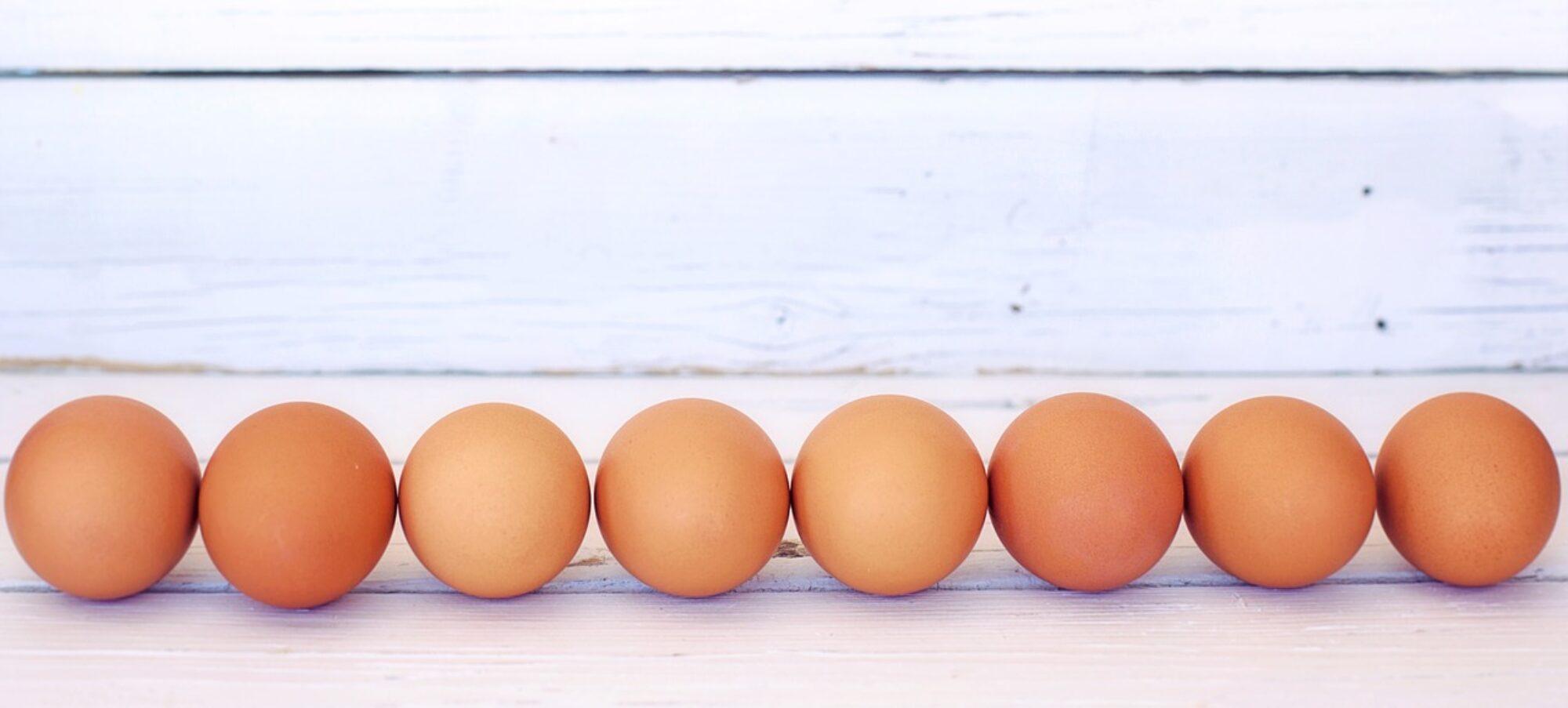 Eierkocher Vergleich